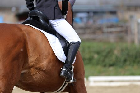 Closeup of a horseback under old leather jumper saddle on competition. Equestrian sport background