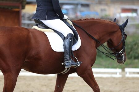 Dressage horse under saddle on equestrian event summertime