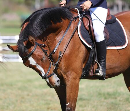 The back of a saddled red horse.Equestrian sport.Dressage horse. Unknown rider riding on back of a stallion with stirrups