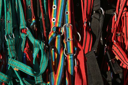 Group of various colorful accessories for equestrian sports