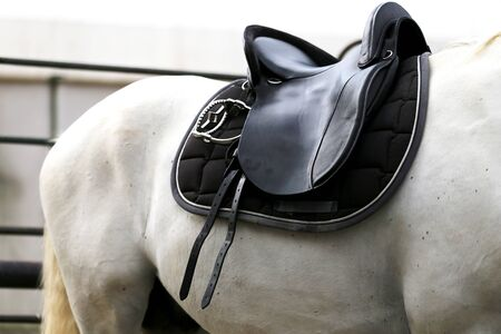 Saddle with stirrups on a back of a horse. Close up of a sport horse. Dressage of horses. Equestrian sport event Stock Photo