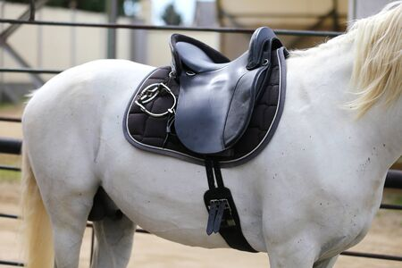 Saddle with stirrups on a back of a horse. Close up of a sport horse. Dressage of horses. Equestrian sport event Standard-Bild