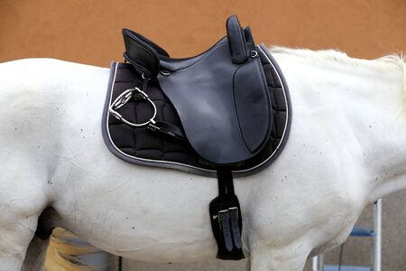 Saddle with stirrups on a back of a horse. Close up of a sport horse. Dressage of horses. Equestrian sport event