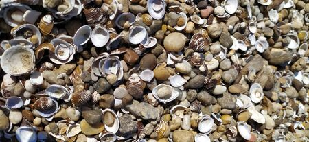 Shell background. Colorful shells on sand beach. Multi-colored shells on the seaside. Calm vacation background with limited depth of field