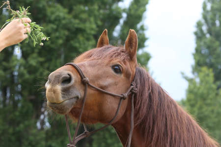 Head of a purebred young horse on natural background at rural animal farm summertime outdoors