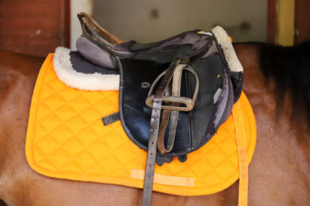 Sport horse close up and old leather saddle ready for dressage training. Equestrian sport background
