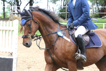 Colorful ribbons rosette is the head of an young award winner show jumper horse on equitation event. Proud rider wearing badges on the winner horse after competitions