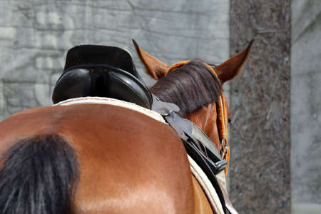 Old leather saddles horse with stirrups on a back of a saddle horse.Close up of a sport horse. Dressage of horses. Equestrian sport event Stock Photo