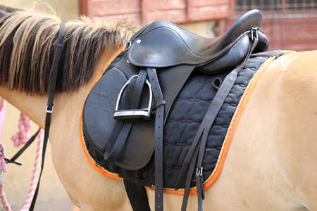 Old leather saddles horse with stirrups on a back of a saddle horse.Close up of a sport horse. Dressage of horses. Equestrian sport event Imagens