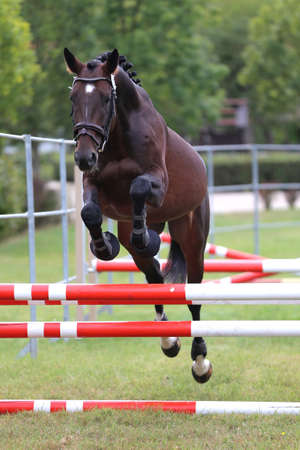 Young purebred horse loose jumping is a breeders event Banco de Imagens - 156749744