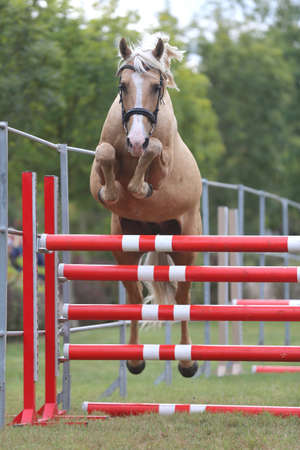 Young purebred horse loose jumping is a breeders event Banco de Imagens - 156749750