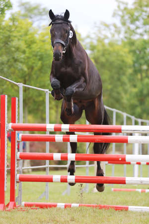 Young purebred horse loose jumping is a breeders event Banco de Imagens - 156749762