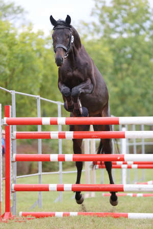 Young purebred horse loose jumping is a breeders event Banco de Imagens - 156749772