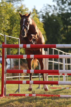 Young purebred horse loose jumping is a breeders event Banco de Imagens - 156749774