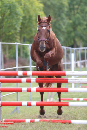 Young purebred horse loose jumping is a breeders event Banco de Imagens - 156749776