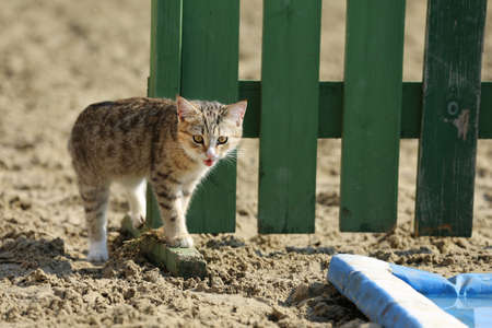 cat outdoors with blurred background.