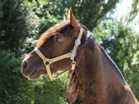 Young beautiful horse posing for camera. Portrait of a purebred young horse in summer corral. Closeup of a young domestic horse on a natural background outdoors rural scene