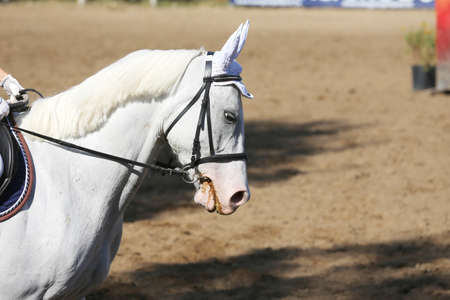 Unknown contestant rides at dressage horse event in riding ground. Head shot close up of a dressage horse during a competition event