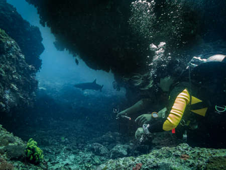 Scuba divers are excited looking at a white-tip reef shark at a tropical coral reef in Gato Island, Malapascua, Philippines. Healthy reef in the center of the coral triangle