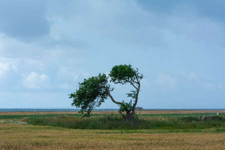 A single tree in a meadow tree with the blue ocean in the background. Dark clouds. Strong winds. The picture was taken near Loddekopinge in Scania, southern Sweden