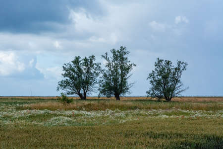 Three trees in a meadow with the blue ocean in the background. Dark clouds. Strong winds. The picture was taken near Loddekopinge in Scania, southern Sweden