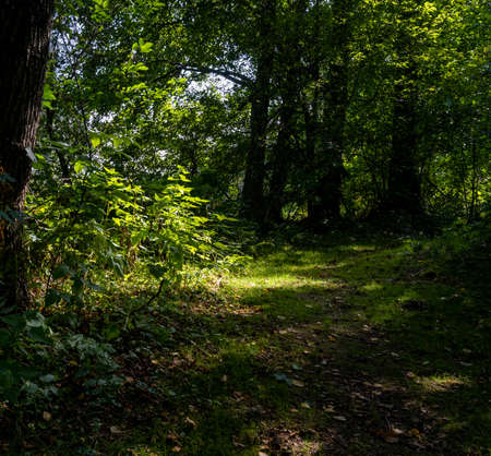 A beautiful green forest glade lit up by a sunbeam. Picture from Scania county, southern Sweden Reklamní fotografie