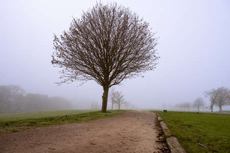 A willow tree with a misty background. Picture from Scania county, Sweden