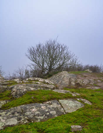 A tree in a windy and misty landscape. Green grass and stones in the foreground. Picture from Kullen nature reserve, Scania county, Sweden Reklamní fotografie