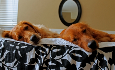 Dogs On Bed photo