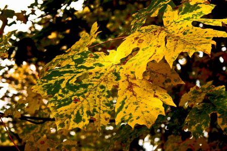 Fall Leaves Banco de Imagens - 15377794