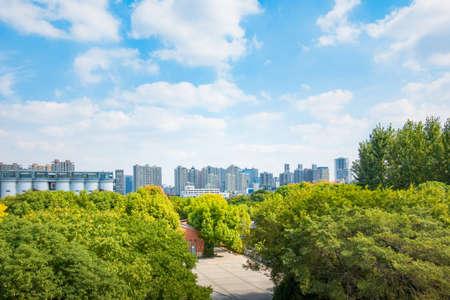 Green area and trees in CBD Zdjęcie Seryjne