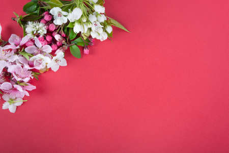spring background; fresh flower on red background.