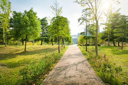 Green spring sunny city park with road and beautiful trees alley Stock Photo