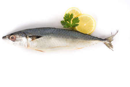 Spanish Mackerel on white background