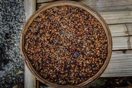 Close up shot of Kopi Luwak aka Civet Coffee beans; world's most expensive coffee excreted by asian palm civet Stock Photo