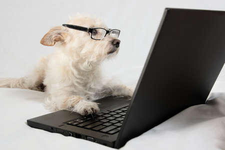 types of glasses: Light brown terrier with glasses looking at laptop