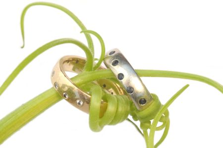 twined: A pair of wedding rings, one white gold with sapphires and the other yellow gold with diamonds, are twined together with a green vine. Stock Photo