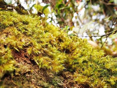 Green moss carpet in tropical forest photo
