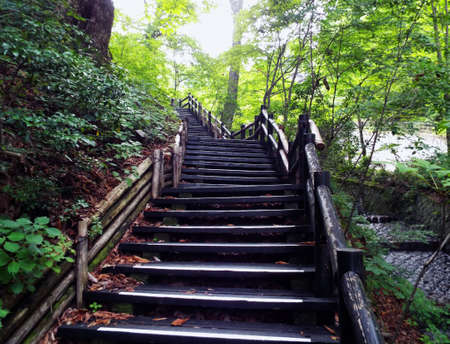 Wonderful old stairs to the top of green hill in the forest Stock Photo