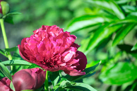 adorn: Beautiful single flower