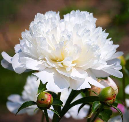 adorn: Beautiful white flower
