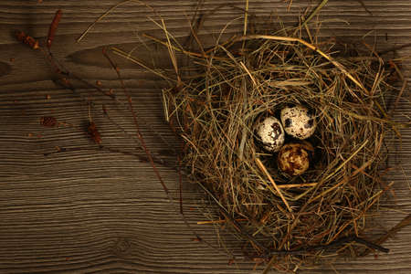 quail nest: Quail eggs in a nest on a wooden background