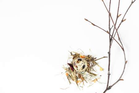 quail egg: quail egg on a white background