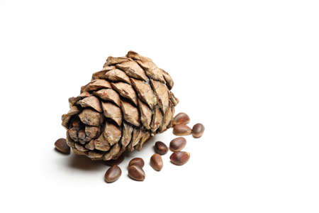 cone shell: pine cones and nuts isolated on white background
