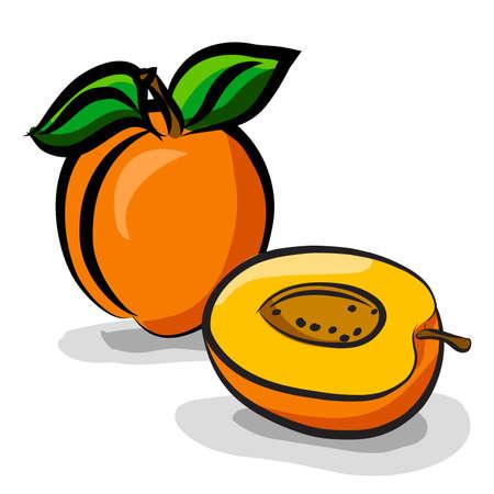 Frutas albaricoque boceto conjunto de dibujo vectorial