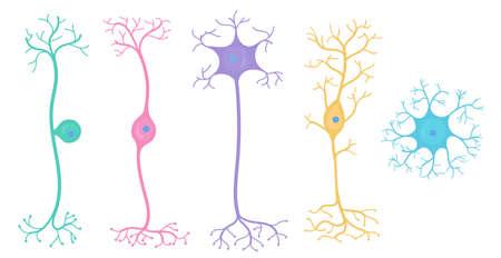 Rodzaje neuronów w mózgu Ilustracje wektorowe