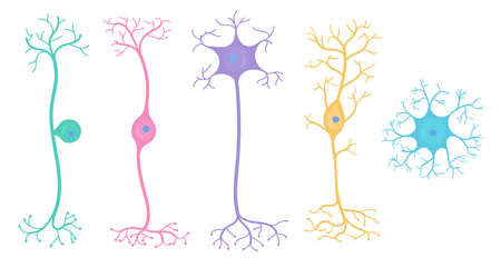 Types of neurons in brain