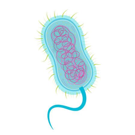 Struktur der Bakterienzelle
