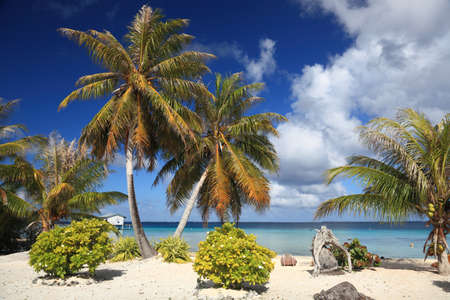 south pacific: Dream Beach at Manihi Atoll in the South Pacific with Coconut Trees  Stock Photo