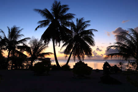 Dream Beach after Sunset at Manihi Atoll in the South Pacific with Coconut Trees  Archivio Fotografico